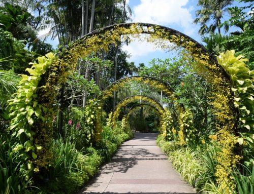 Singapur Botanik Bahçesi