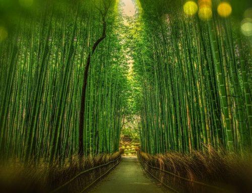 Kyoto'da Nerede Kalınır ? | Bölgeler ve Otel Tavsiyeleri
