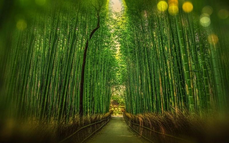 Kyoto'da Nerede Kalınır