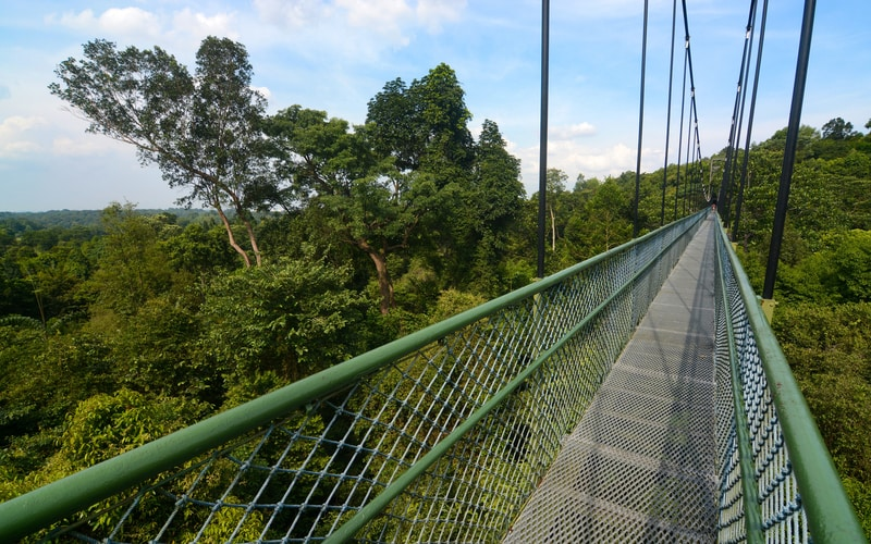MacRitchie Reservoir - Treetop walk
