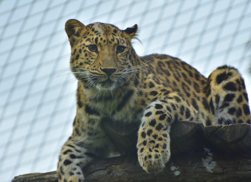 Viyana Hayvanat Bahçesi