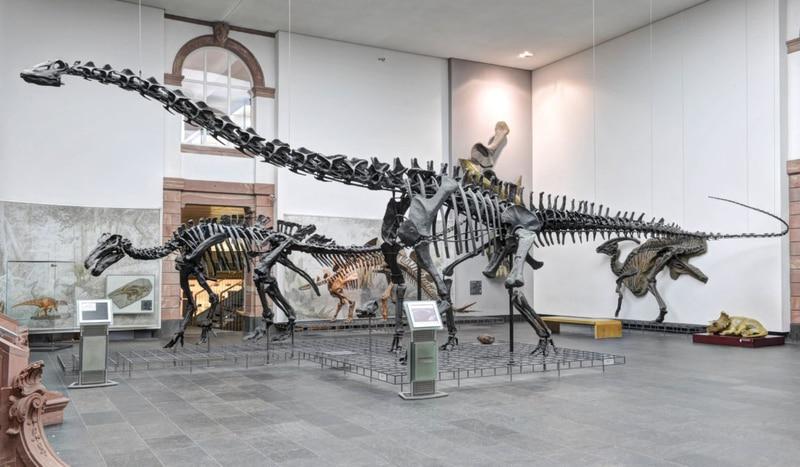 Senckenberg Doğa Tarihi Müzesi