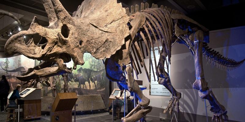 Bilim Müzesi - Boston Gezilecek Yerler Blog