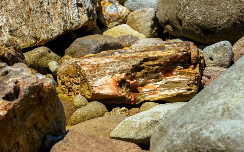 Midilli Taşlaşmış Ormanı Doğal Tarih Müzesi