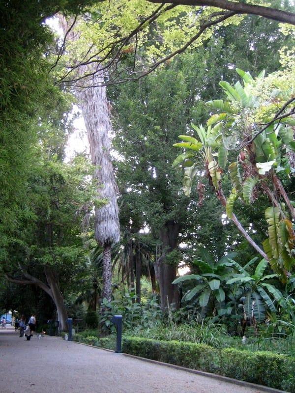 Botanik Bahçesi Valencia
