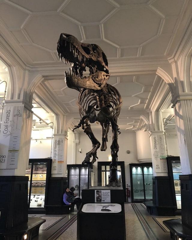 Manchester Müzesi - Manchester Gezilecek Yerler