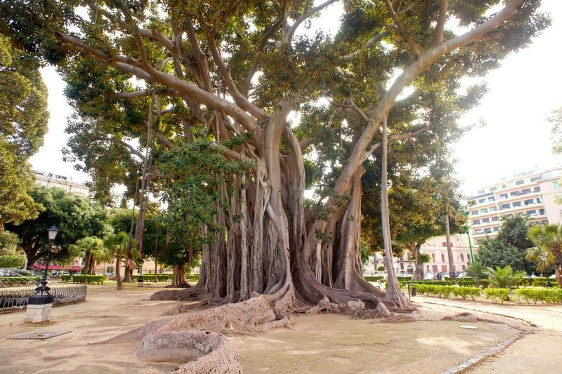 Garibaldi Bahçesi Palermo