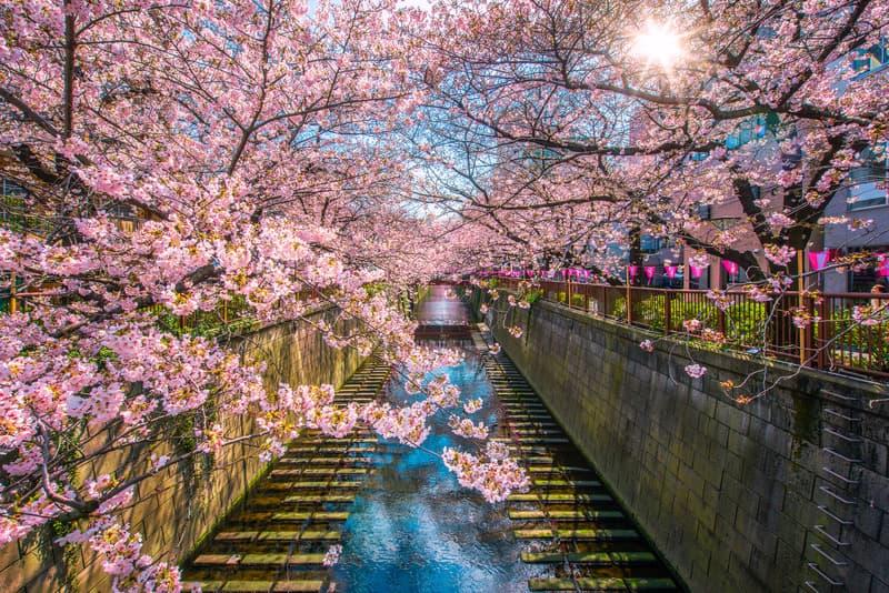 Meguro Nehri Tokyo