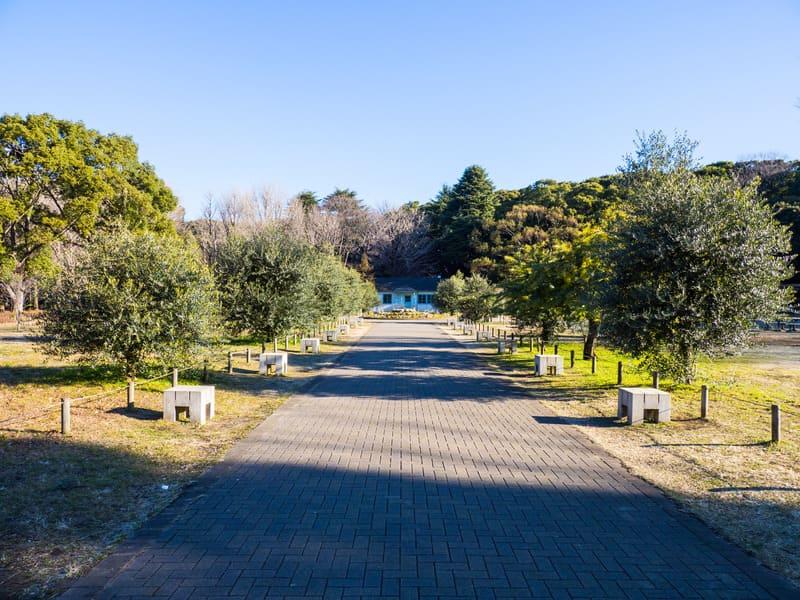 Yoyogi Parkı Tokyo