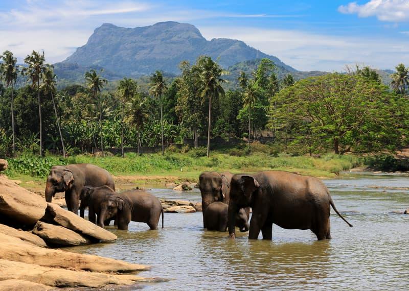 Elephant Jungle Sanctuary - Fil Ormanı Koruma Alanı