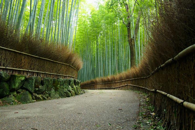 Bambu Korusu Kyoto Gezilecek Yerler