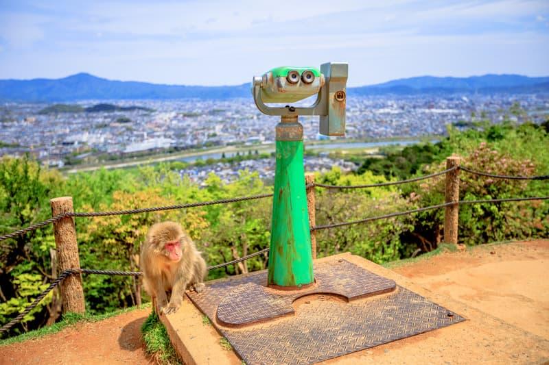 Maymun Parkı Iwatayama Kyoto