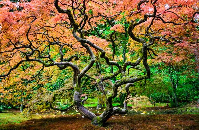 Seattle Japon Bahçesi - Seattle Gezilecek Yerler