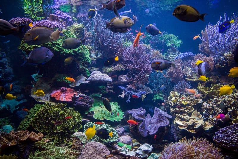 Underwater World Pattaya Gezilecek Yerler