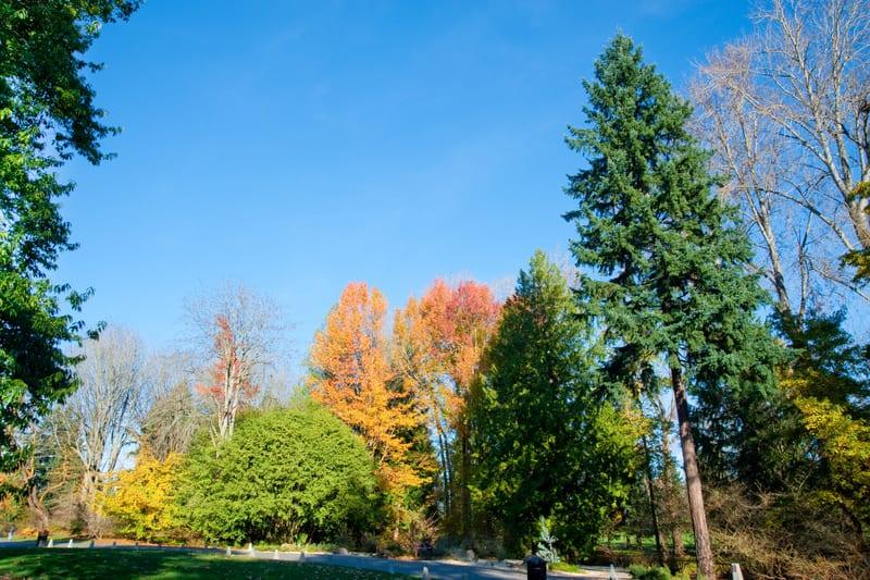 Washington Parkı Arboretumu Seattle Gezilecek Yerler