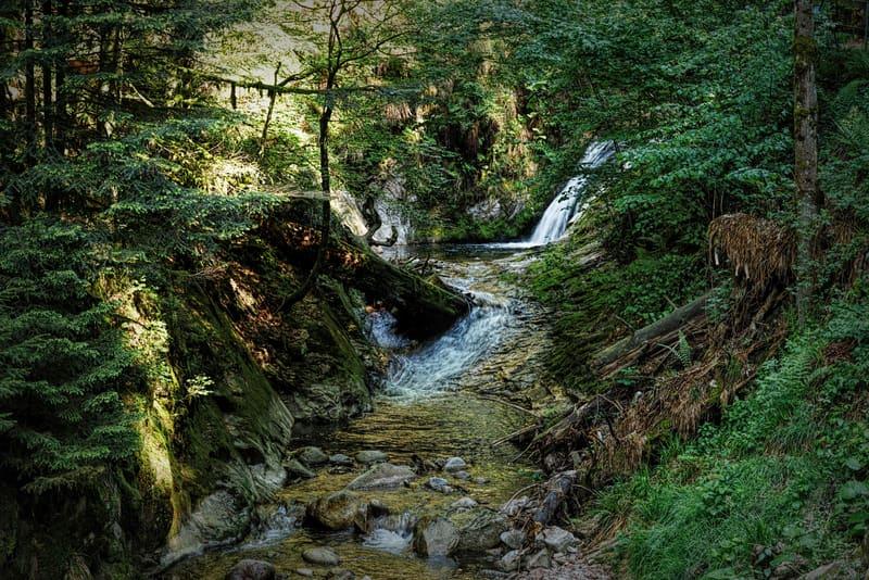 Kara Orman - Black Forest