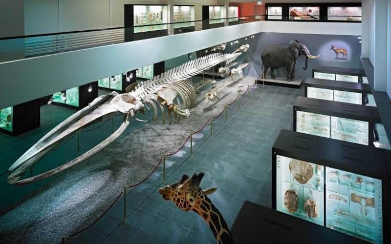 Doğal Tarih Müzesi