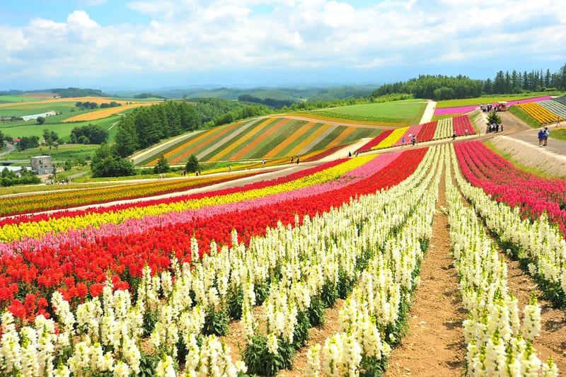 Hokkaido Adası - Japonya Gezilecek Yerler Blog