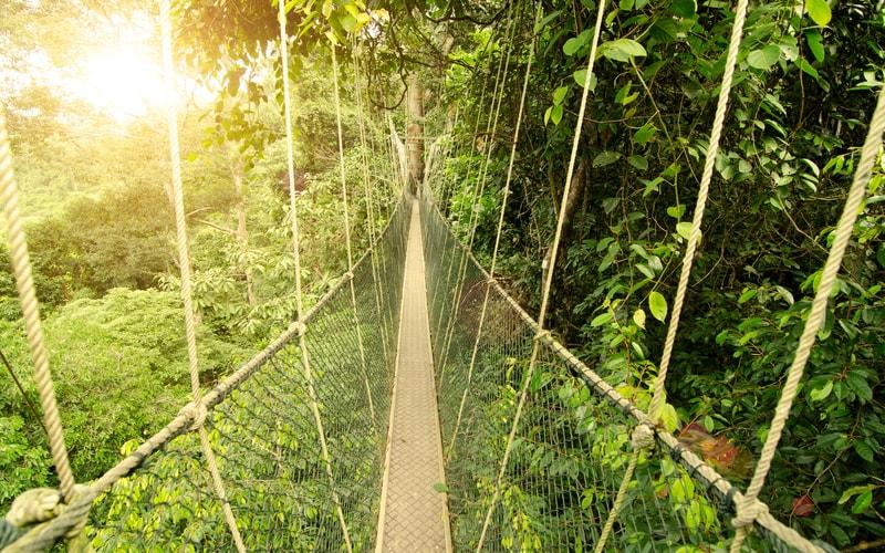 Taman Negara - Malezya Gezilecek Yerler Listesi