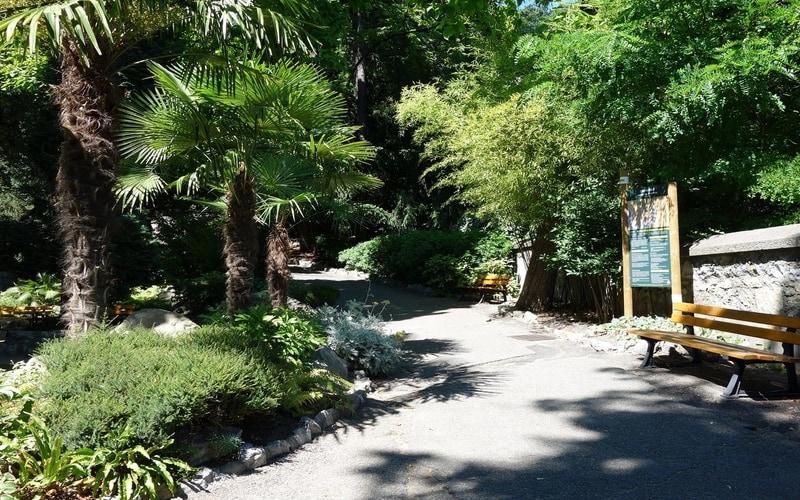 Dauphins Garden