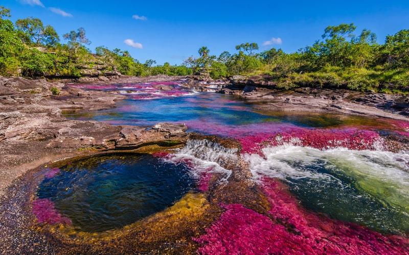 Caño Cristales - Dünyanın En ilginç Yerleri