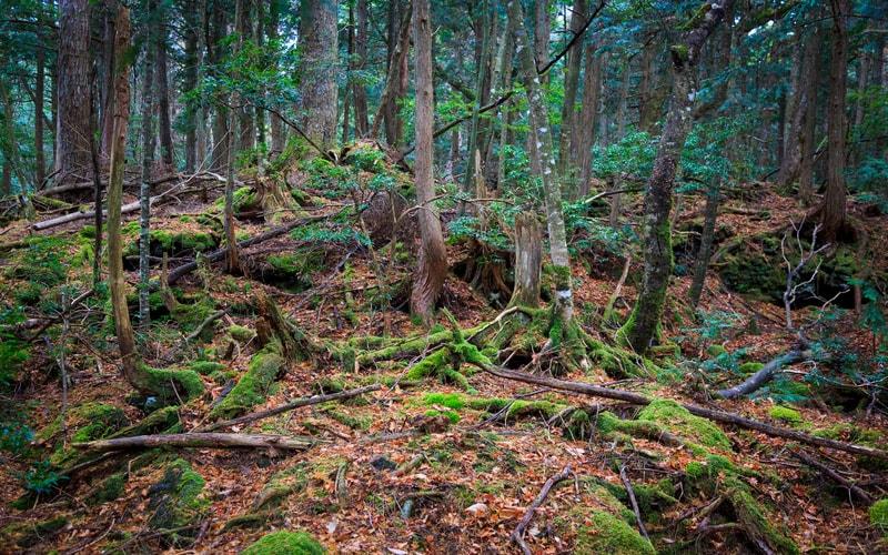 Aokigahara Ormanı